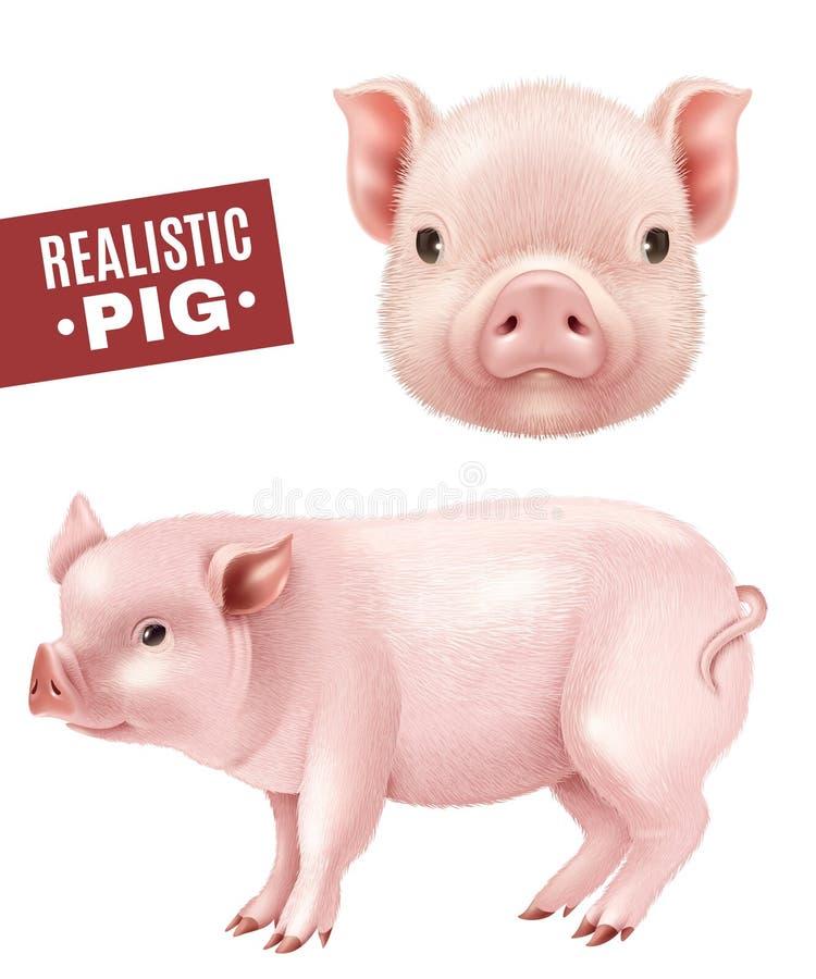 猪现实象集合 库存例证