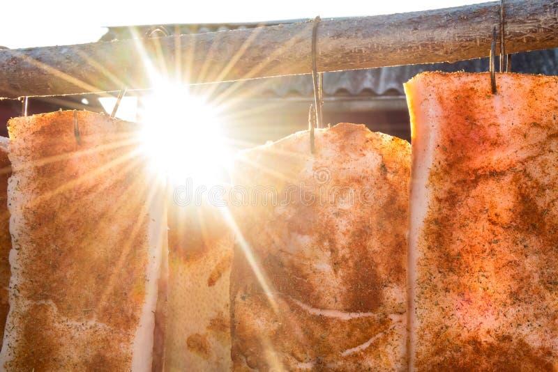 猪肉火腿在阳光下 库存图片