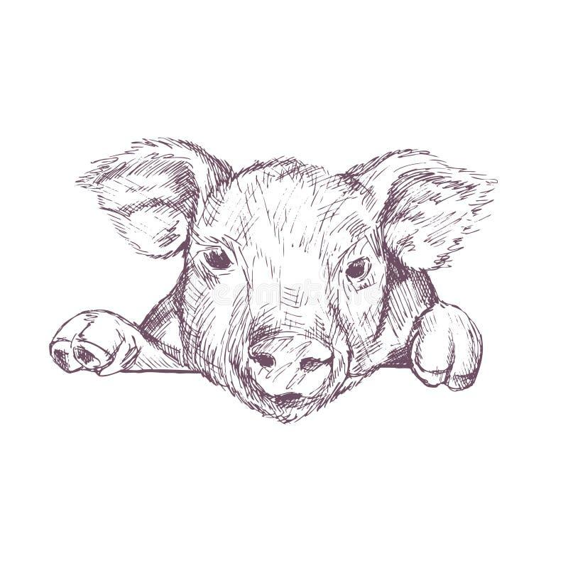 猪 草图 手拉的向量例证 皇族释放例证