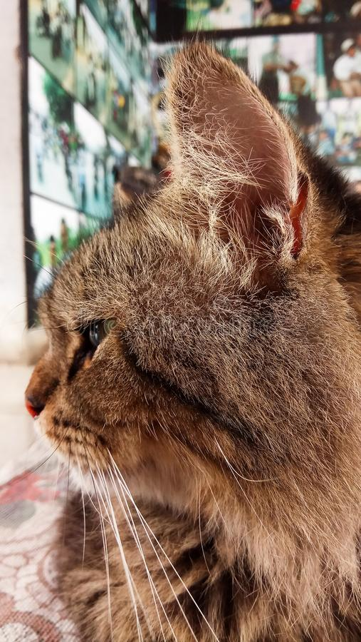 猫😔 免版税图库摄影