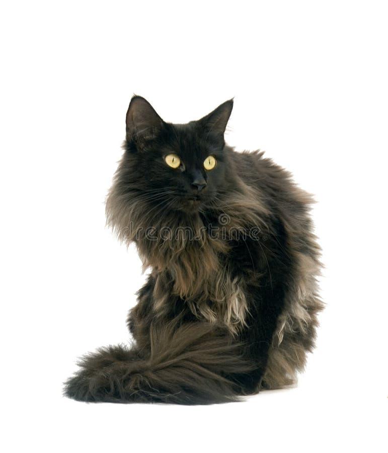 猫一点 库存图片