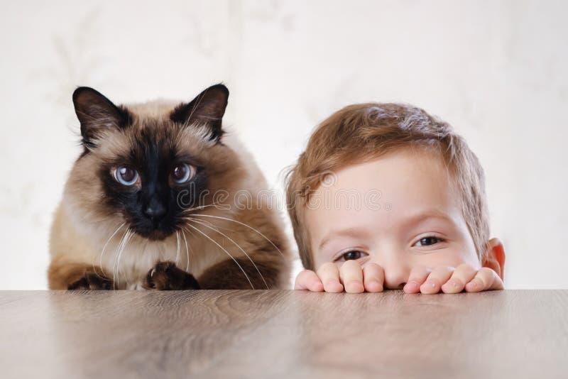 猫一起儿童巴厘语使用 动物年轻 免版税库存照片