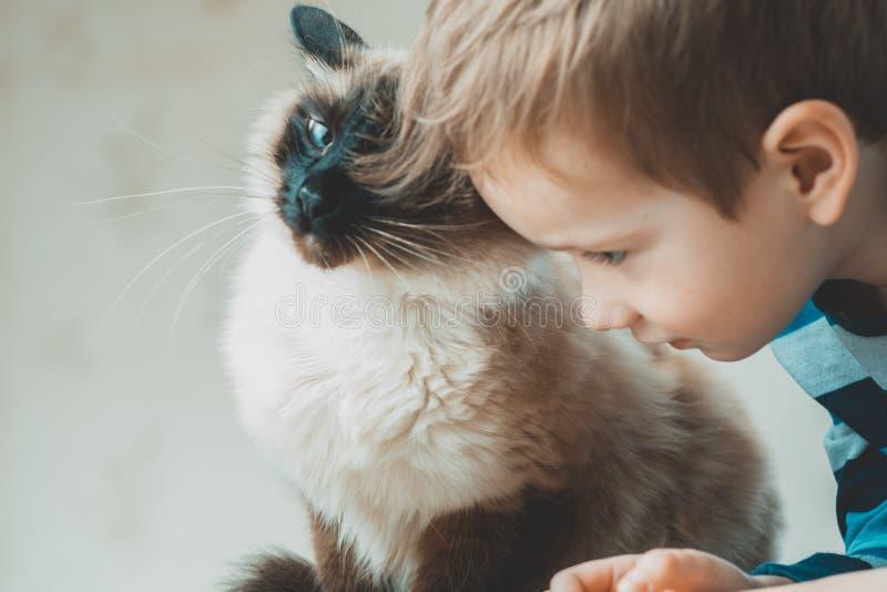 猫一起儿童巴厘语使用 国内的关心 免版税库存图片