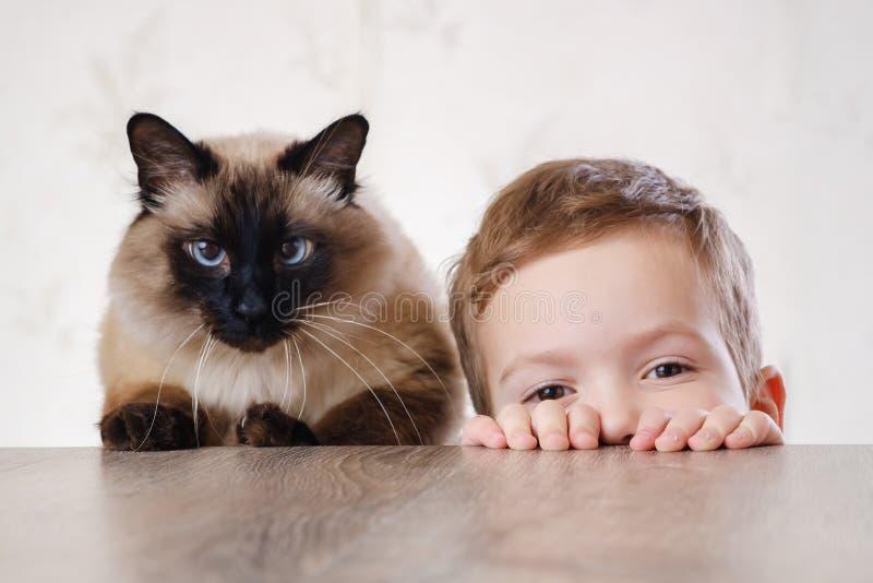 猫一起儿童巴厘语使用 逗人喜爱的动物 免版税库存图片