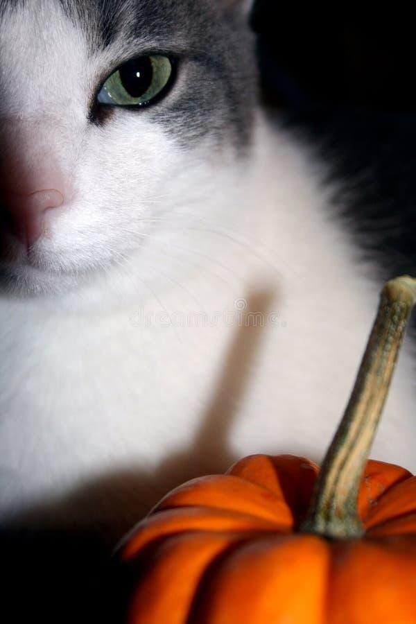 猫万圣节 库存照片