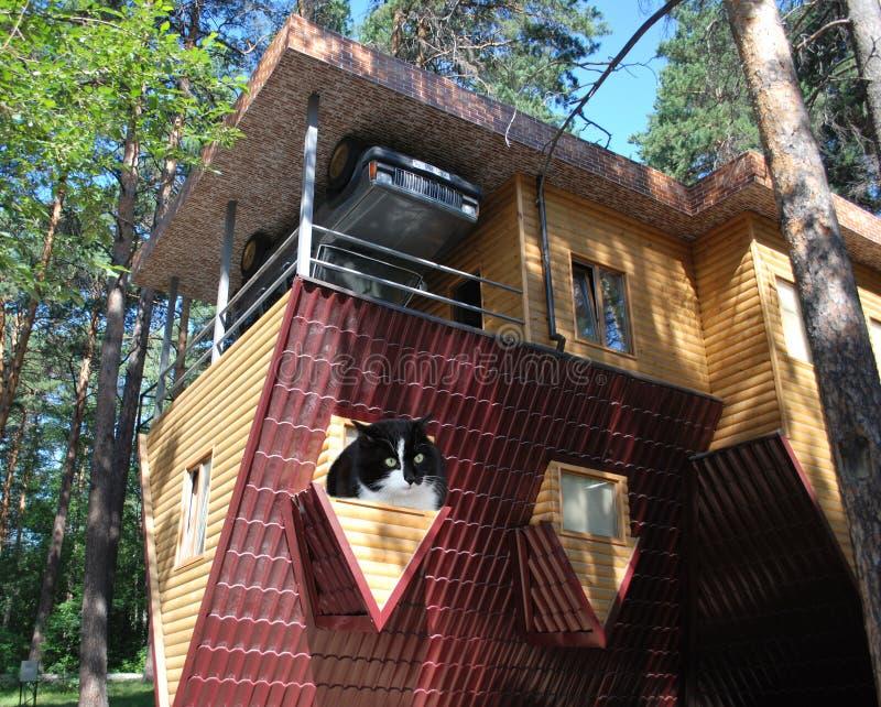 猫不可能加入错误房子 免版税库存照片