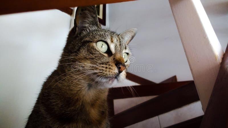 猫世界全部赌注自然房子 图库摄影