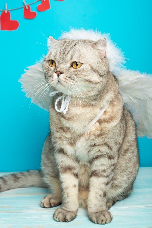 猫丘比特、逗人喜爱的天使与弓箭,情人节的概念 库存照片