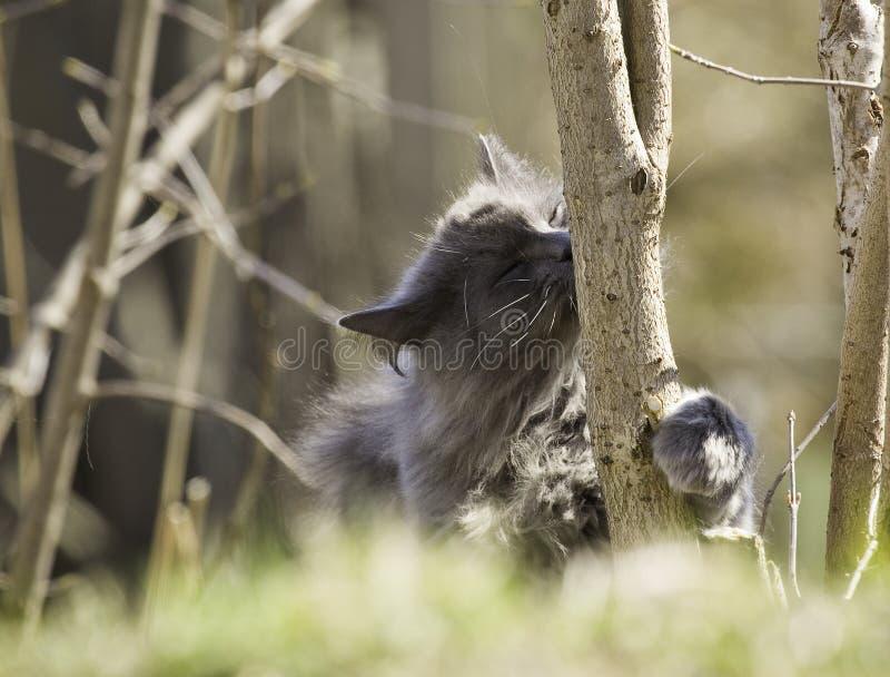 猫亲吻的树 库存图片