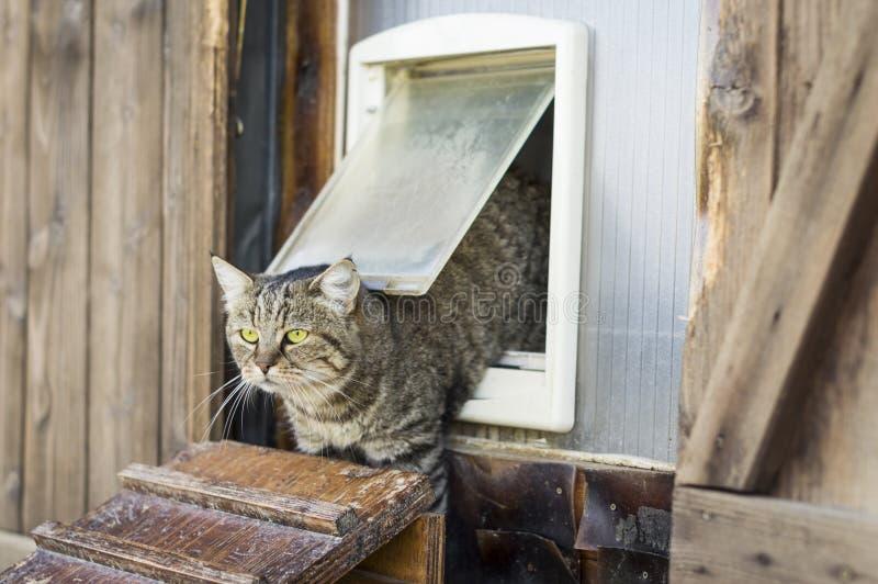 猫从猫门,好的场面逃脱 免版税库存照片