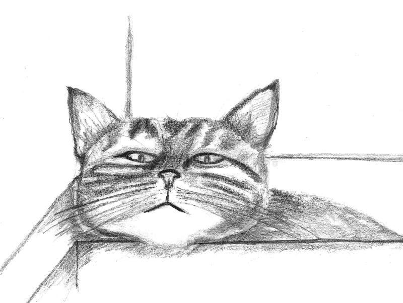猫以顶头休息 库存图片