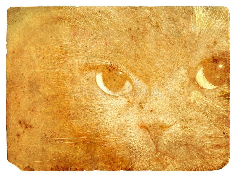 猫传神眼睛老明信片 皇族释放例证