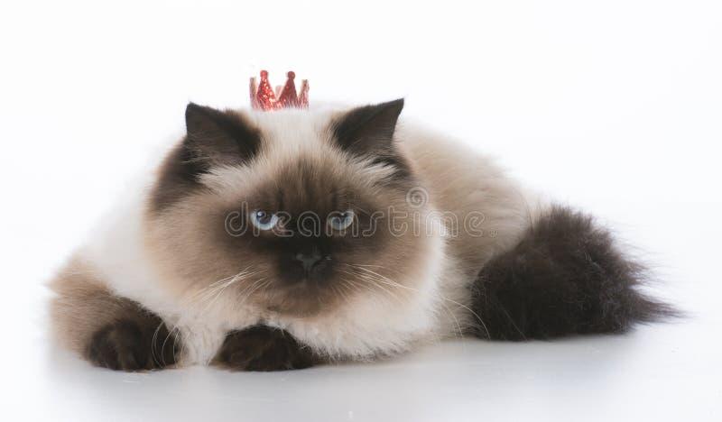 猫佩带的冠状头饰 库存照片