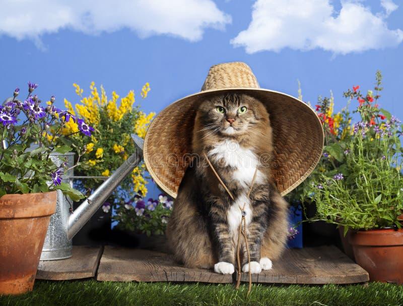 猫佩带的从事园艺的帽子 免版税库存照片