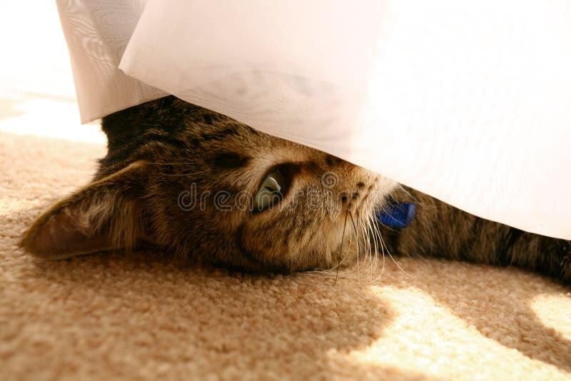 猫偷看 图库摄影