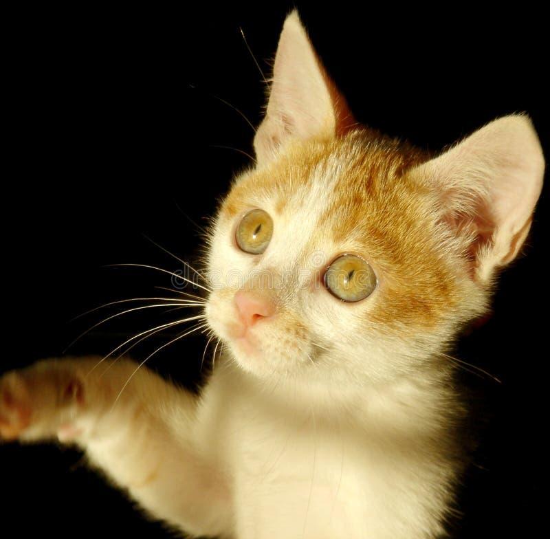 猫光 免版税图库摄影