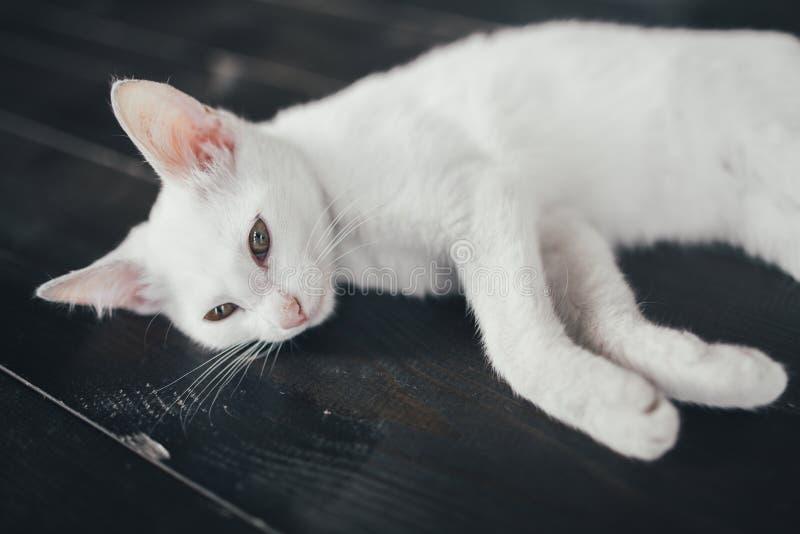 猫全部赌注里面一点软的白色背景 免版税库存图片