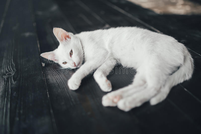 猫全部赌注里面一点软的白色背景 免版税库存照片