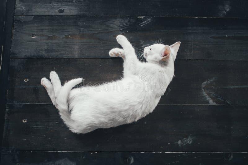 猫全部赌注里面一点软的白色背景 库存照片