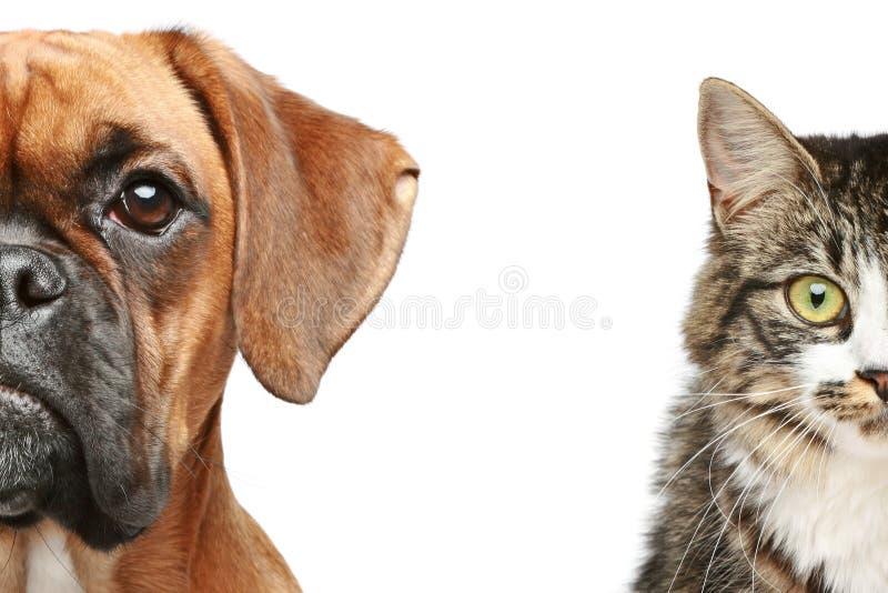 猫关闭狗半枪口纵向  免版税库存图片