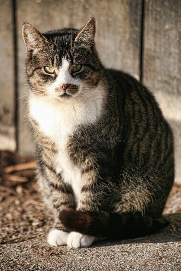 猫农场 图库摄影