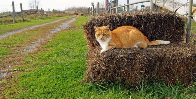 猫农场 免版税图库摄影
