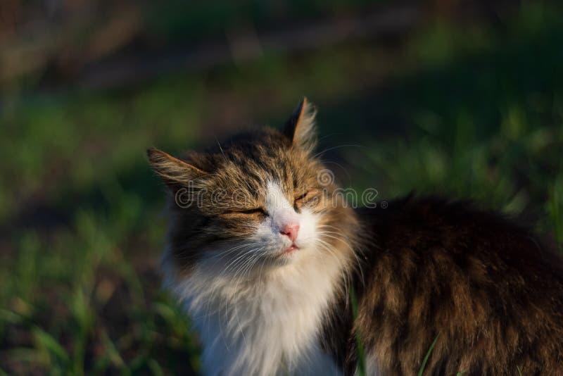 猫半眯着的眼睛在阳光下 库存照片