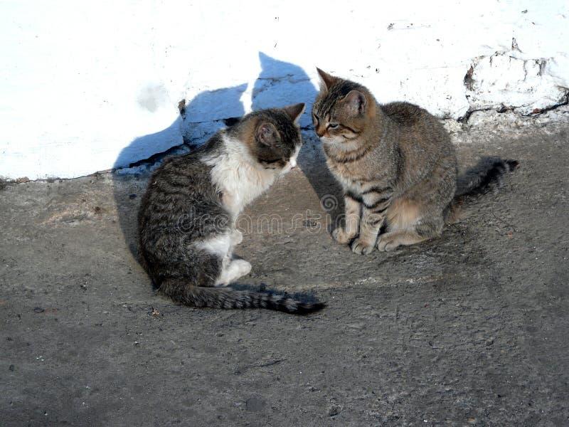 猫取暖在阳光下 免版税库存照片