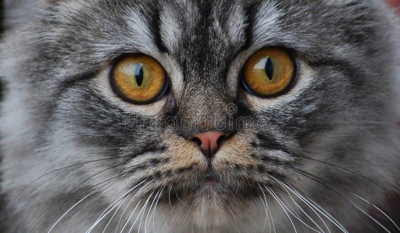 猫口鼻部 图库摄影