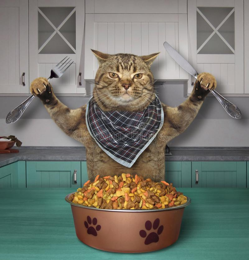 猫吃干饲料厨房 免版税库存照片