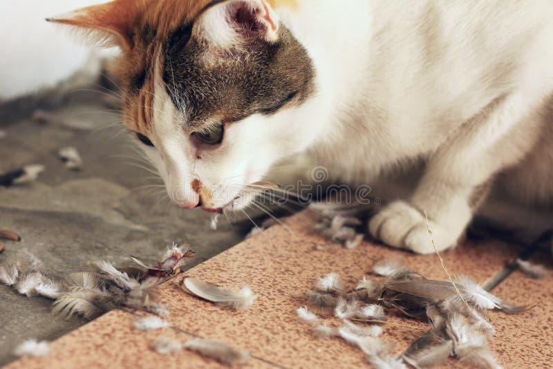 猫吃鸟狩猎天性概念 免版税库存照片