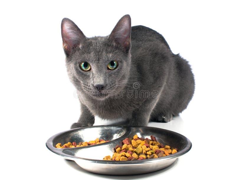 猫吃 免版税库存图片