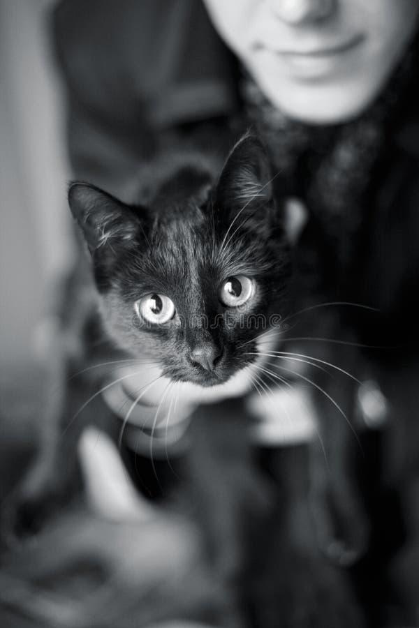 猫名义上Amely 图库摄影