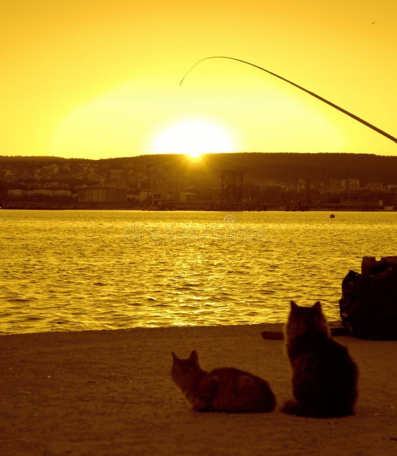 猫和勾子在日落码头 免版税库存图片