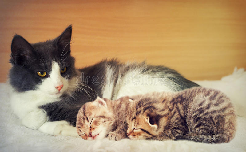 猫和小猫 图库摄影