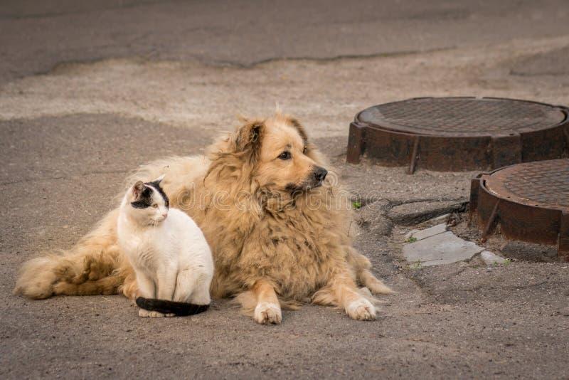 猫和狗一起坐边路 库存照片