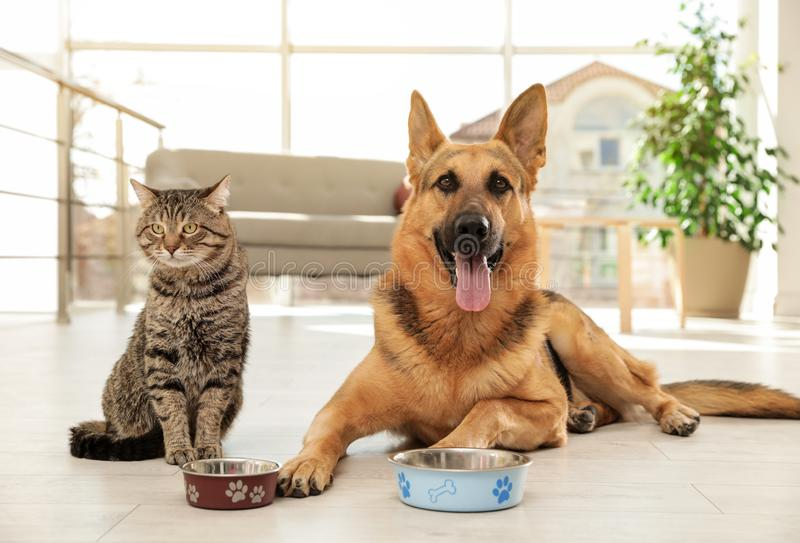 猫和狗与哺养的碗一起在地板上 滑稽的朋友 免版税库存图片