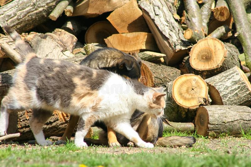 猫和狗友谊家庭 库存图片