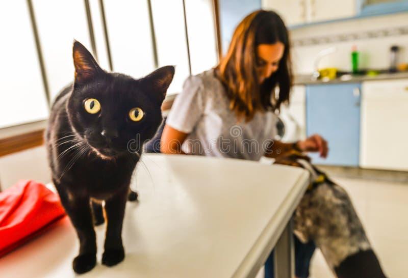 猫和狗在厨房里 免版税库存照片
