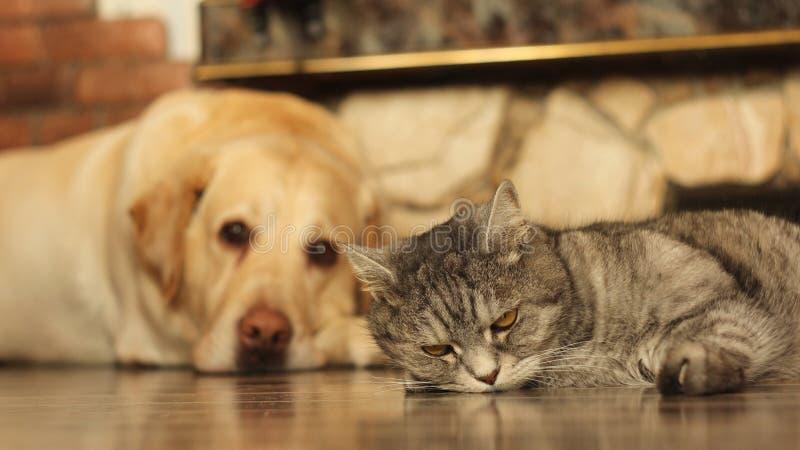 猫和狗在地板上 库存图片