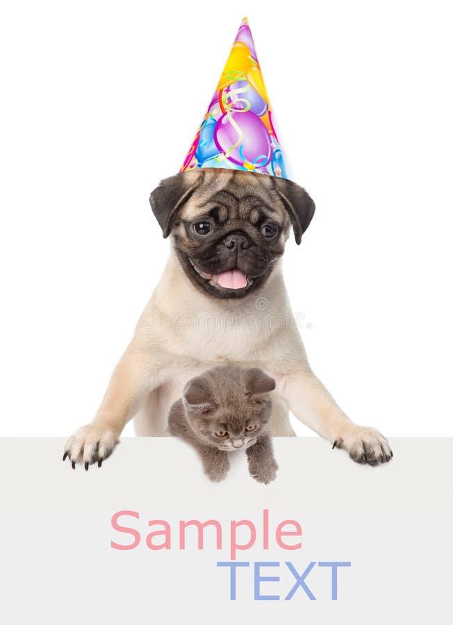 猫和狗在生日帽子在白色横幅上 文本的空间 查出在白色 免版税库存图片