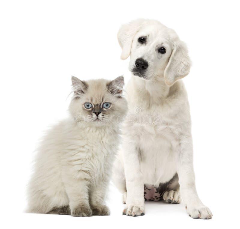 猫和狗开会 免版税图库摄影