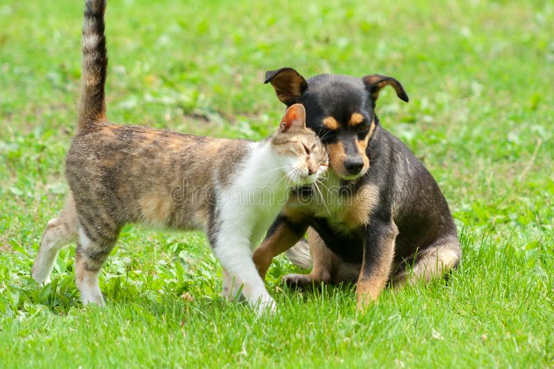 猫和狗接触他们的头 美好的动物友谊 免版税库存照片