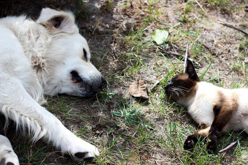 猫和狗是朋友最好  库存照片