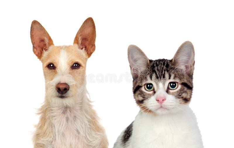 猫和狗特写镜头  免版税库存图片