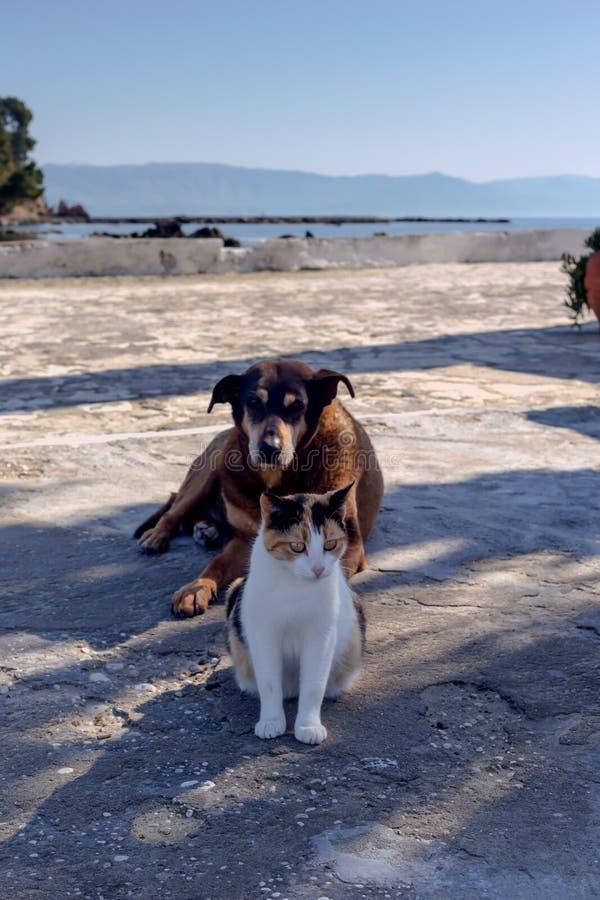猫和狗的友谊 图库摄影