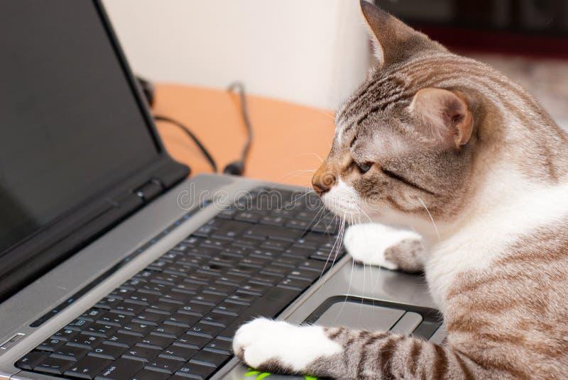 猫和膝上型计算机键盘 库存图片