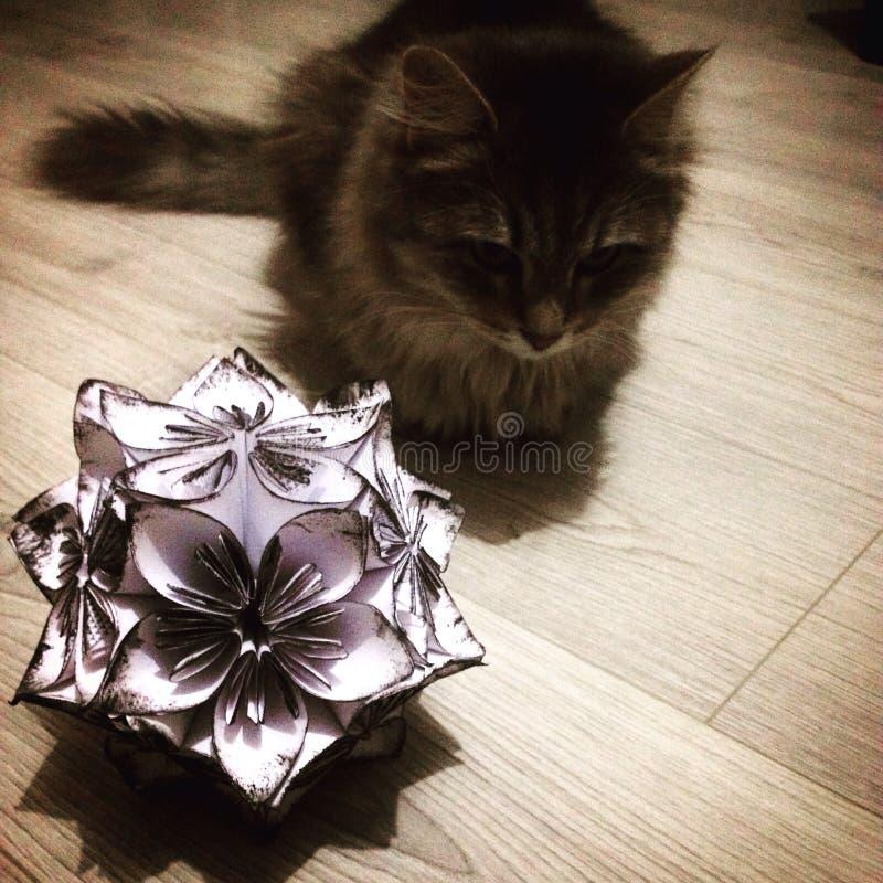 猫和花球 免版税库存图片