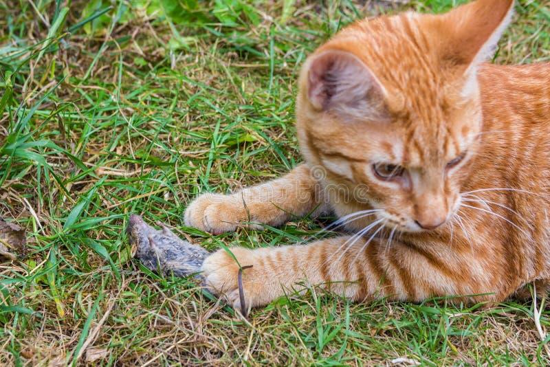 猫和鼠标 免版税库存照片