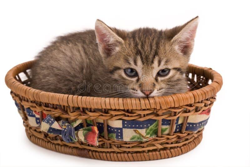 猫咪 库存图片